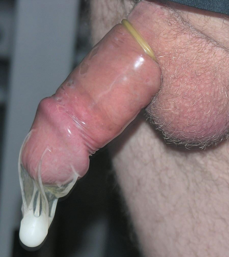 Condom on a horse cock