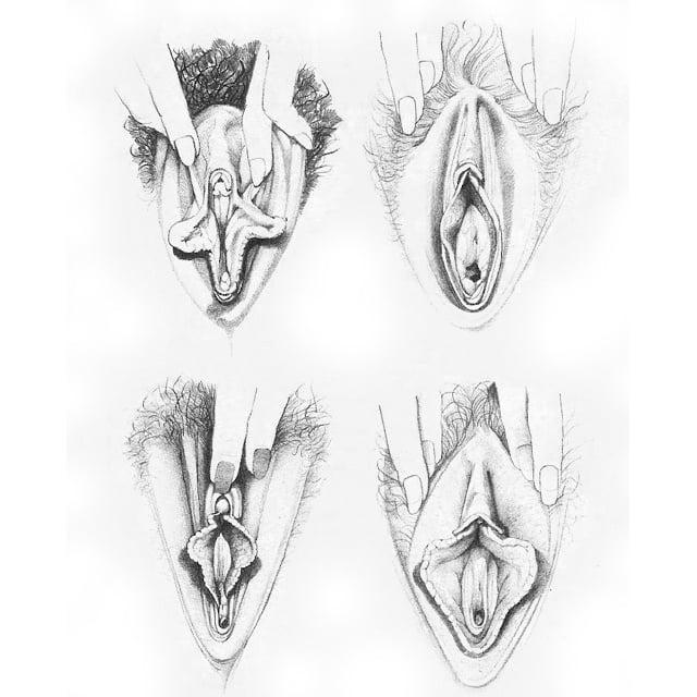 влагалище подробный рисунок - 12